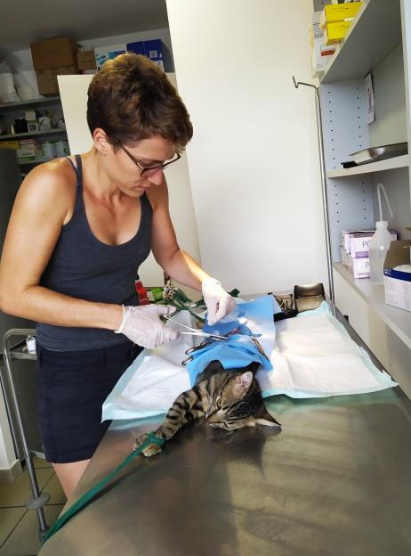 Vet Marie at work in Lifou
